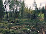 1_Metsä